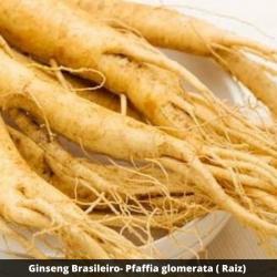 Ginseng Brasileiro - Pfaffia glomerata ( Raiz)