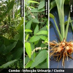 COMBO - Infecção Urinária / Cistite