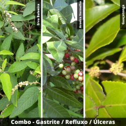 COMBO - Gastrite - Refluxo - Úlceras