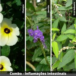 COMBO- Inflamações Intestinais
