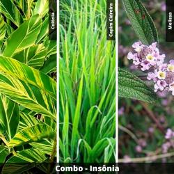 COMBO - Insonia
