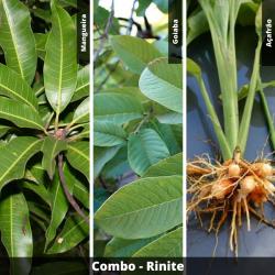 COMBO - Rinite