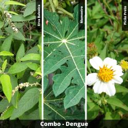 COMBO - Dengue