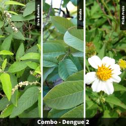COMBO - Dengue 2