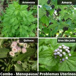 COMBO-Menopausa / Problemas Uterinos / Endometriose / Adenomiose