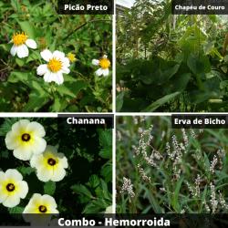 COMBO - Hemorroida  (Chá)