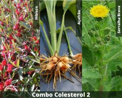 COMBO - Colesterol 2