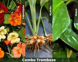 COMBO - Trombose